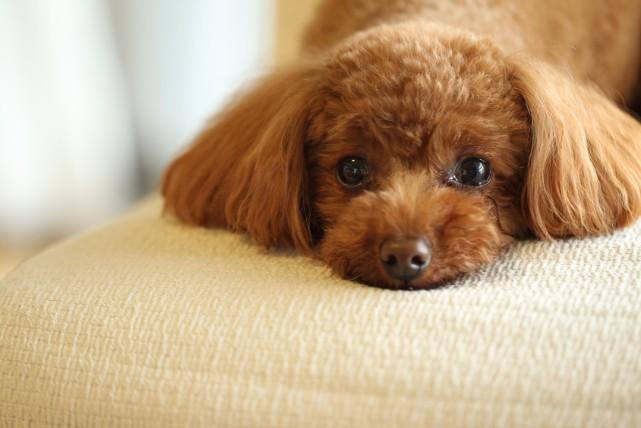 部屋飼いしている人は要チェック!室内に漂う犬の臭い対策3つ