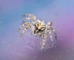 何かこわい!家に出現する3大クモの退治方法と侵入対策を解説中